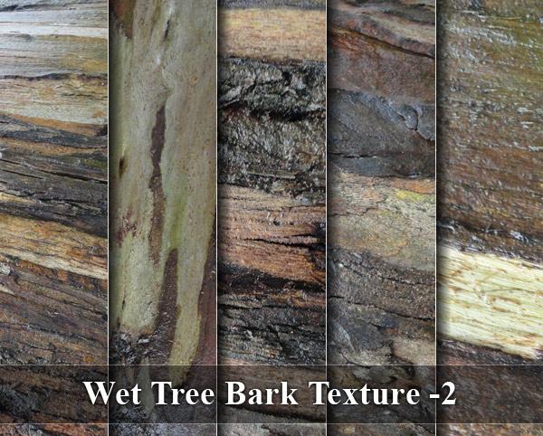Wet Tree Bark Texture -2