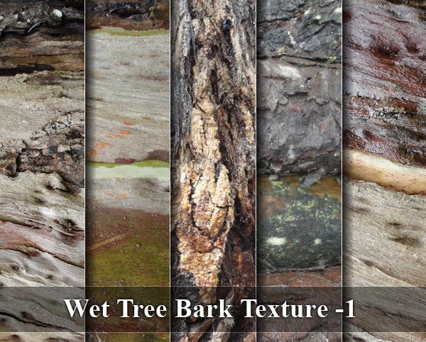 Wet Tree Bark Texture -1
